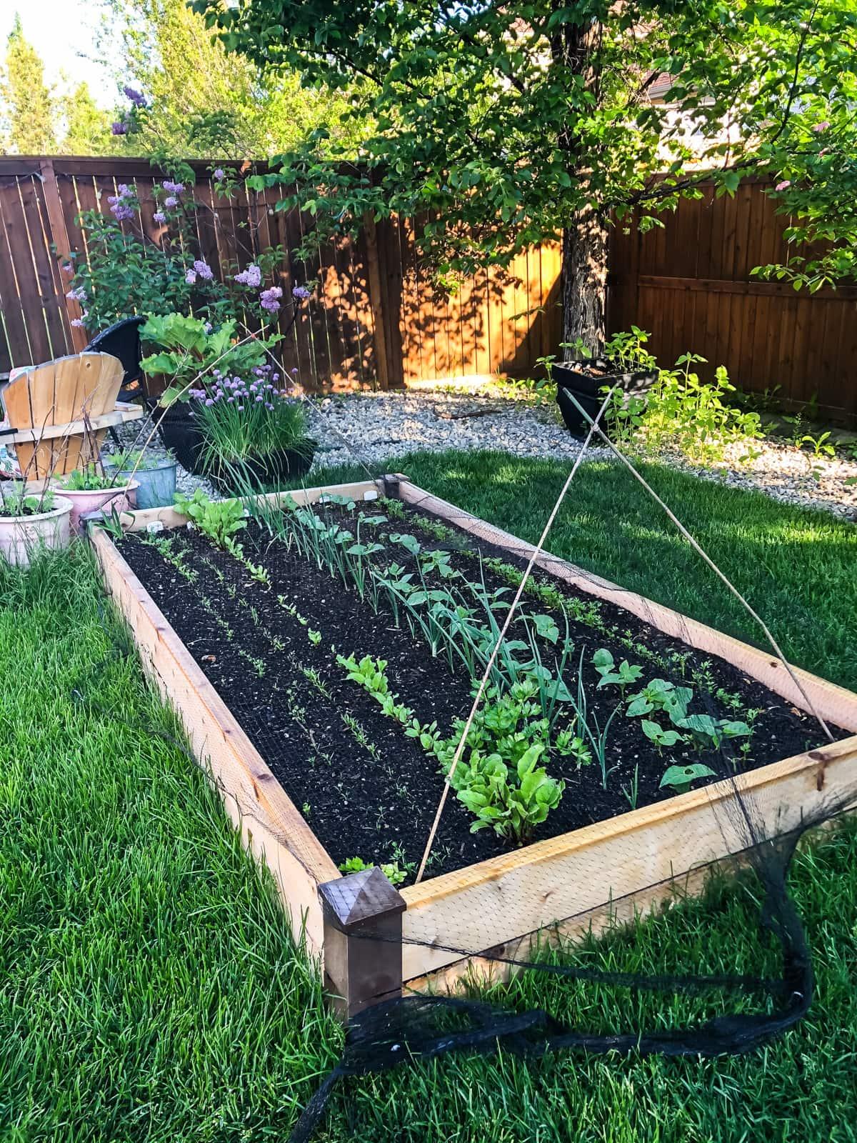 grow a Garden for Earth Day