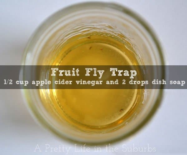 Fruit-Fly-Trap-{A-Pretty-Life}