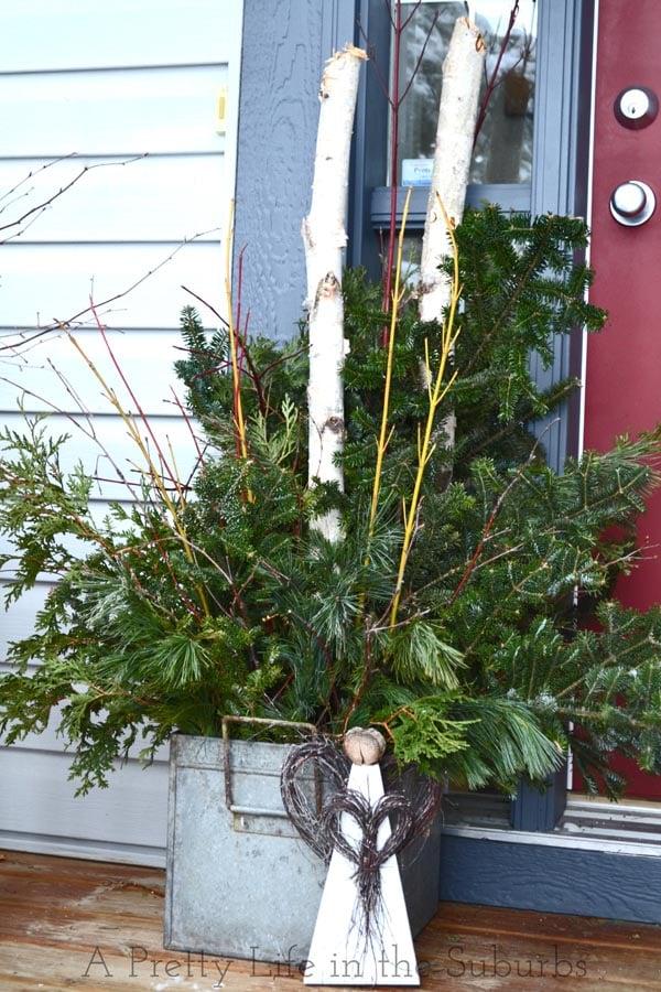 Fresh Evergreen Christmas Pots