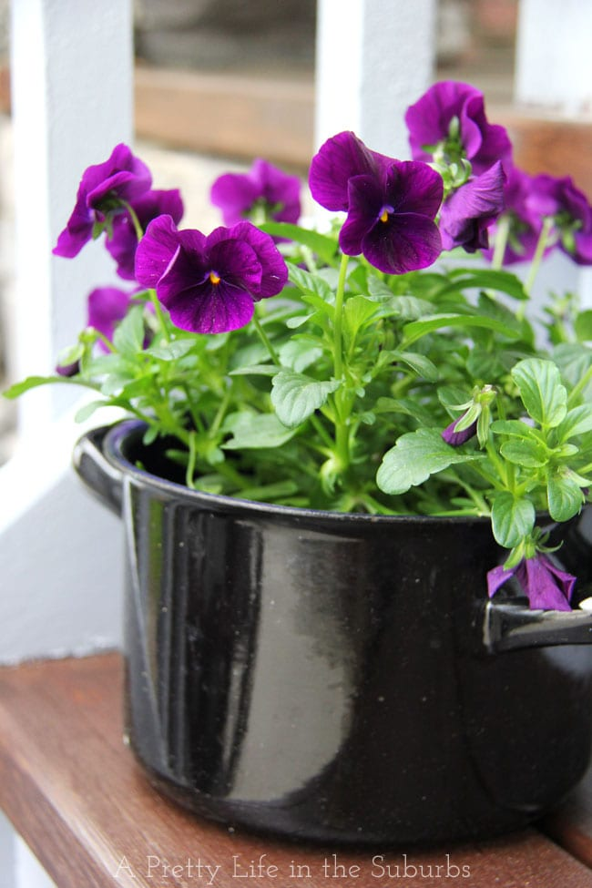 Pansies in 1930's enamel pot {A Pretty Life}