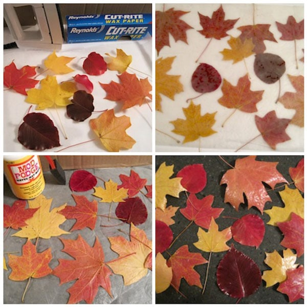 How-to-preserve-fall-leaves1