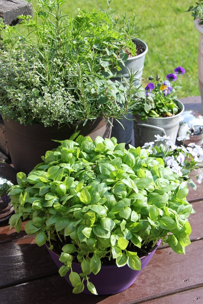 Herb Container Garden 2{A Pretty Life}
