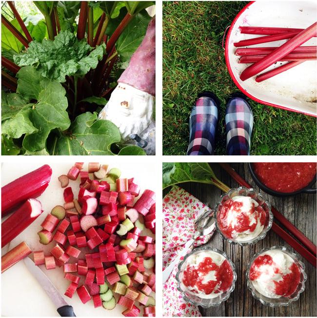 Easy Stewed Rhubarb