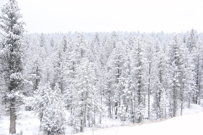 Winter in Canada {A Pretty Life}