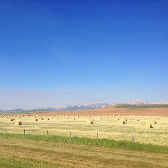 The Cowboy Trail {A Pretty Life}2