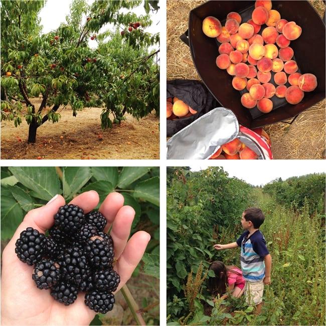 U Pick Farms in Oregon