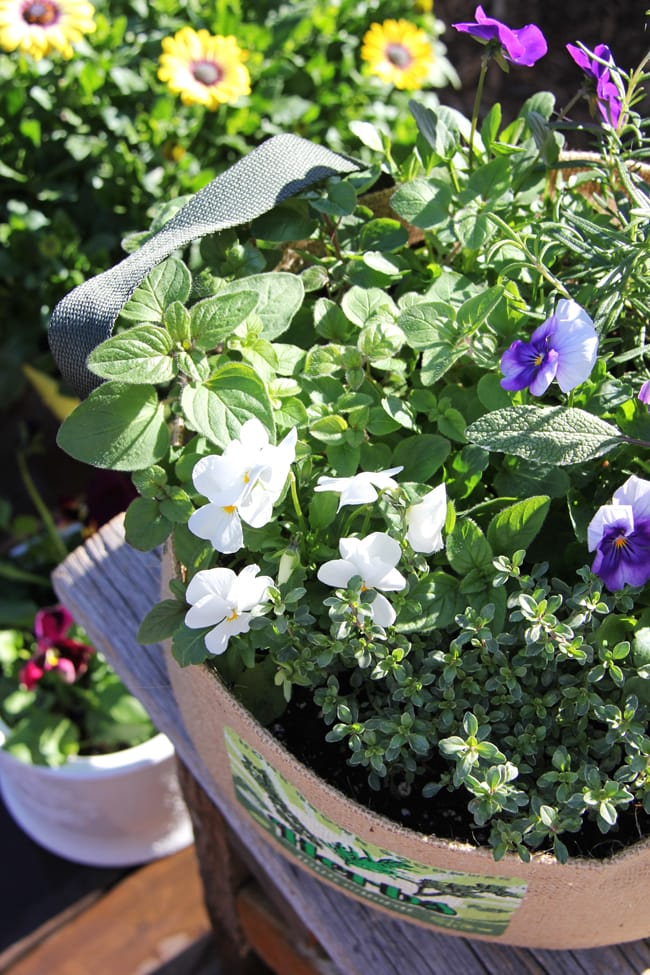 Container Gardening {A Pretty Life}