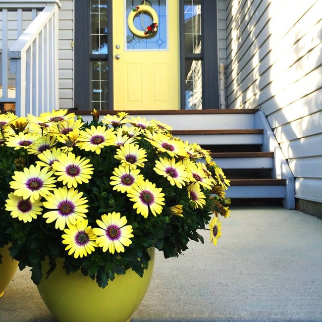 Container Gardening with Lowes {A Pretty Life}