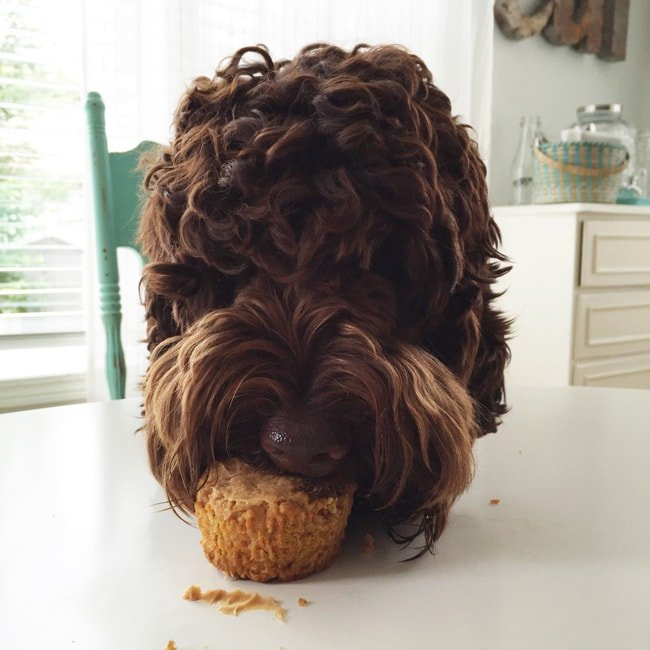 Healthy Peanut Butter Pupcakes 3{A Pretty Life}