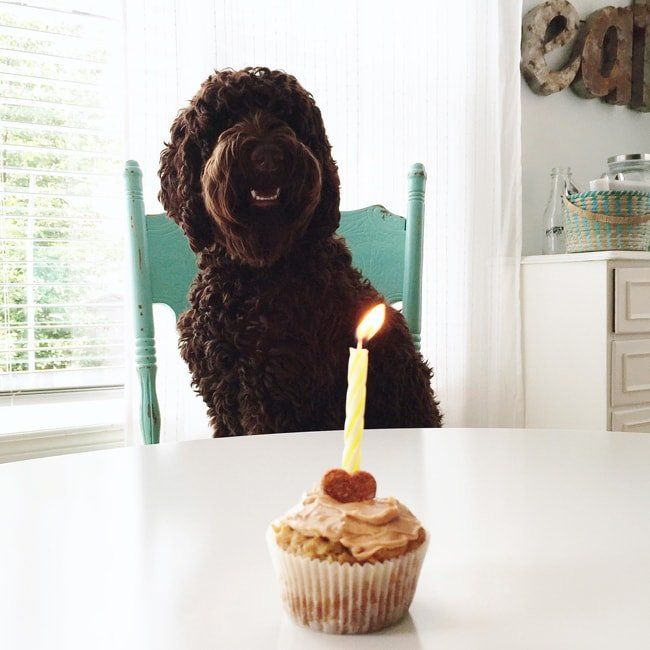 Healthy Peanut Butter Pupcakes  {A Pretty Life}