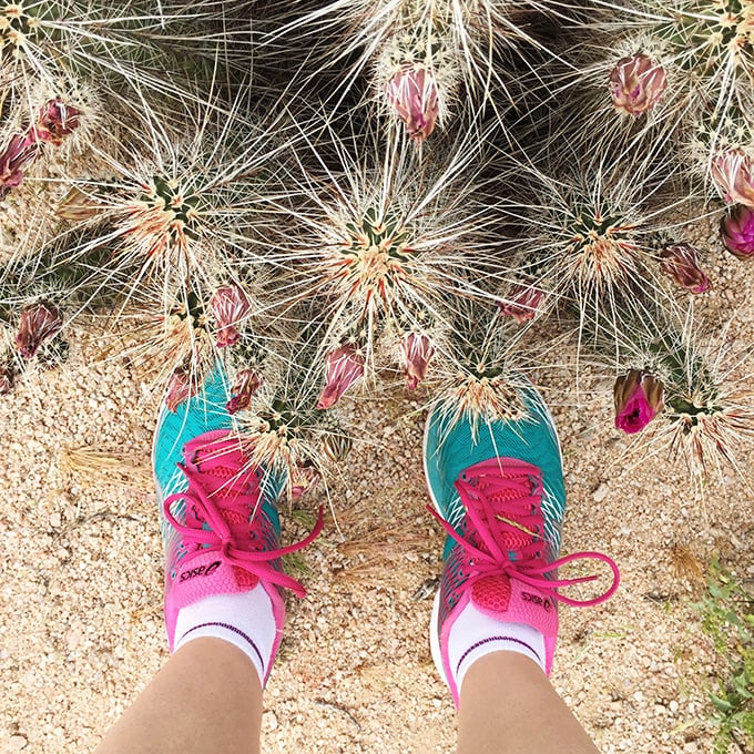 Kid Friendly Hikes in the Phoenix Area