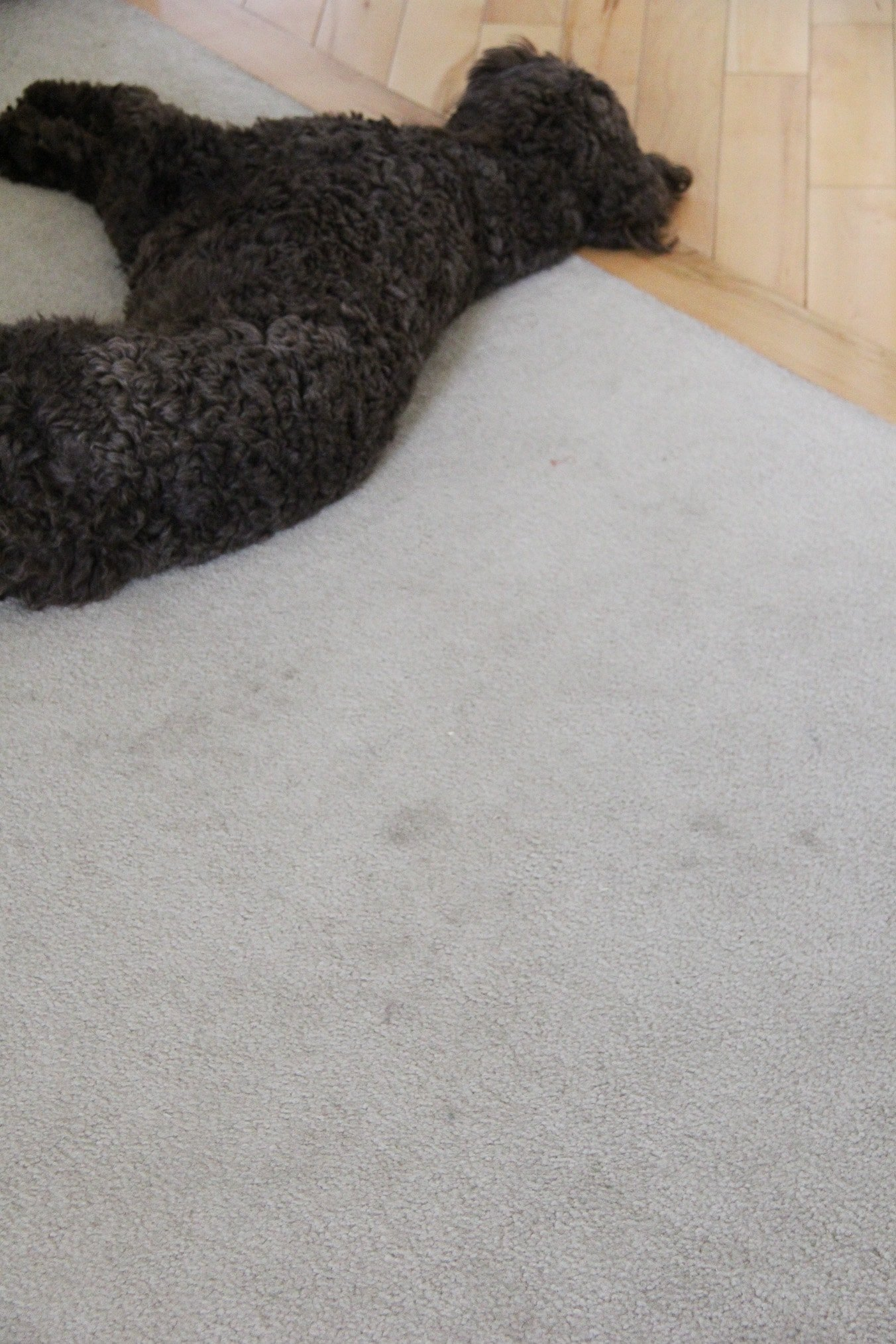 Product Review: Hoover Power Scrub Elite Pet Carpet Cleaner