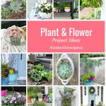 Plant and Flower Project Ideas