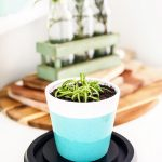 How to Propagate Spider Plants