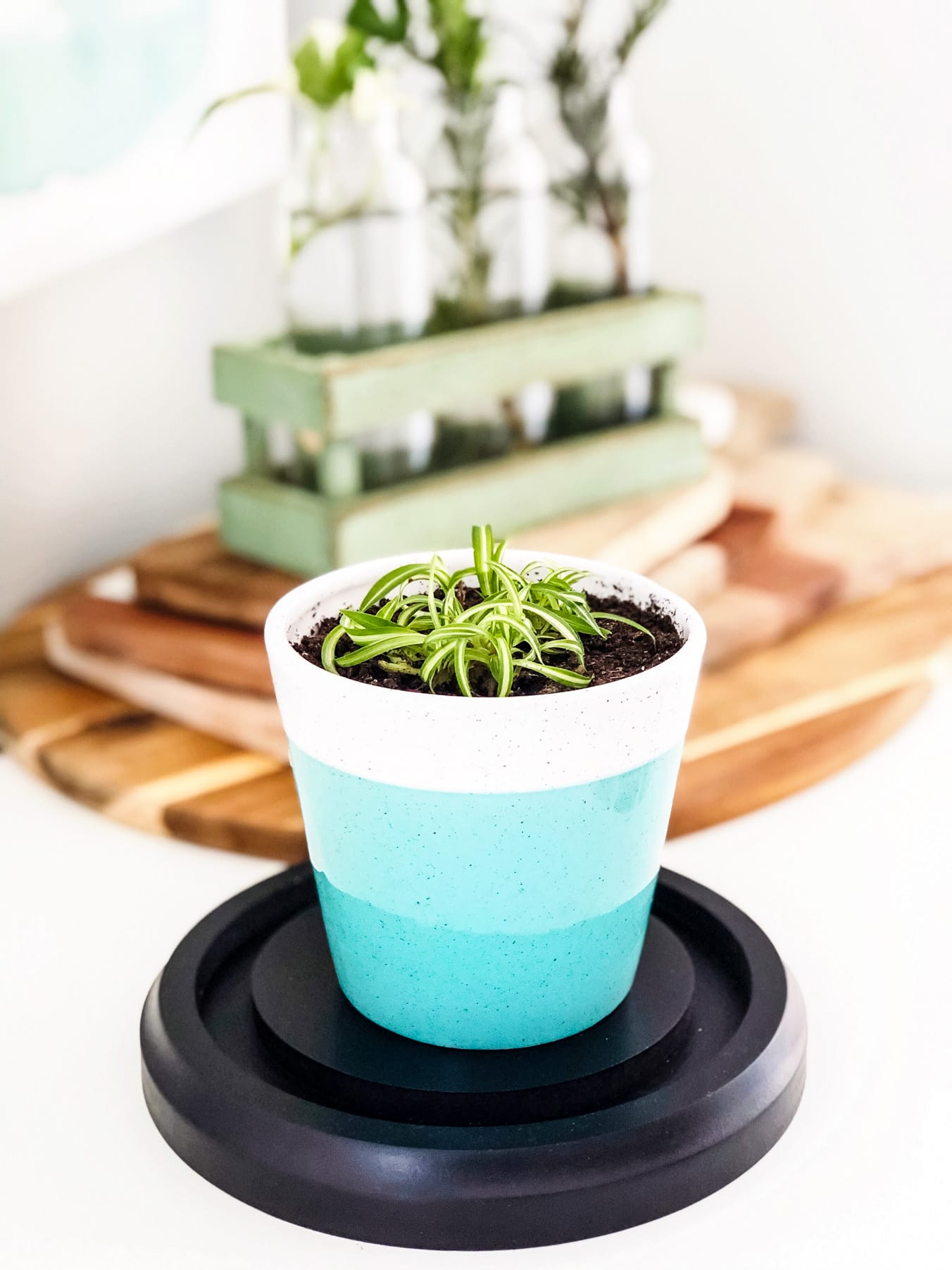 How To Propagate Spider Plants A Pretty Life In The Suburbs
