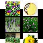 10 Easy to Grow Edible Flowers