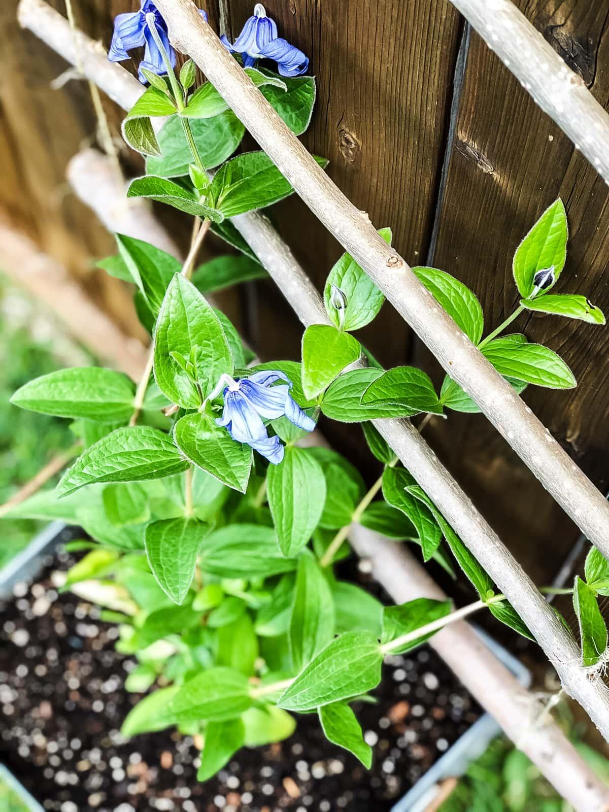 DIY Hanging Garden Trellis