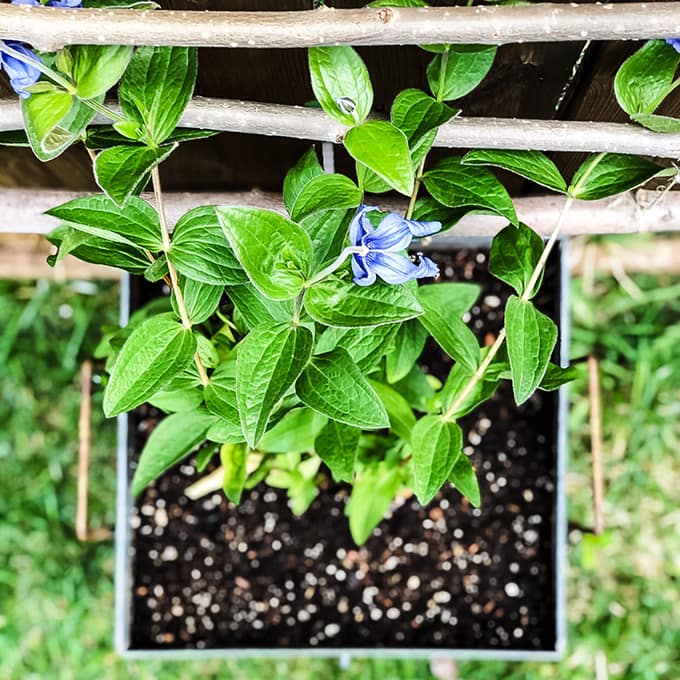Diy Hanging Garden Trellis A Pretty Life In The Suburbs