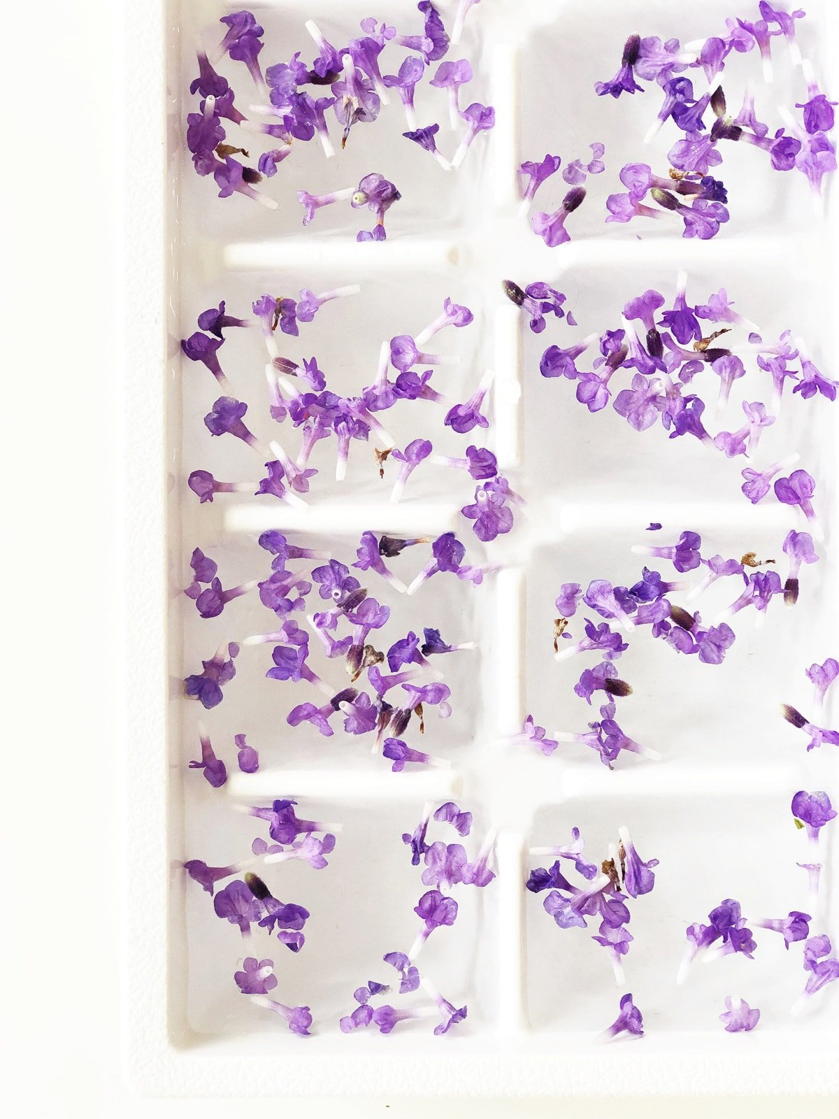 How to Make Lavender Petal Ice Cubes