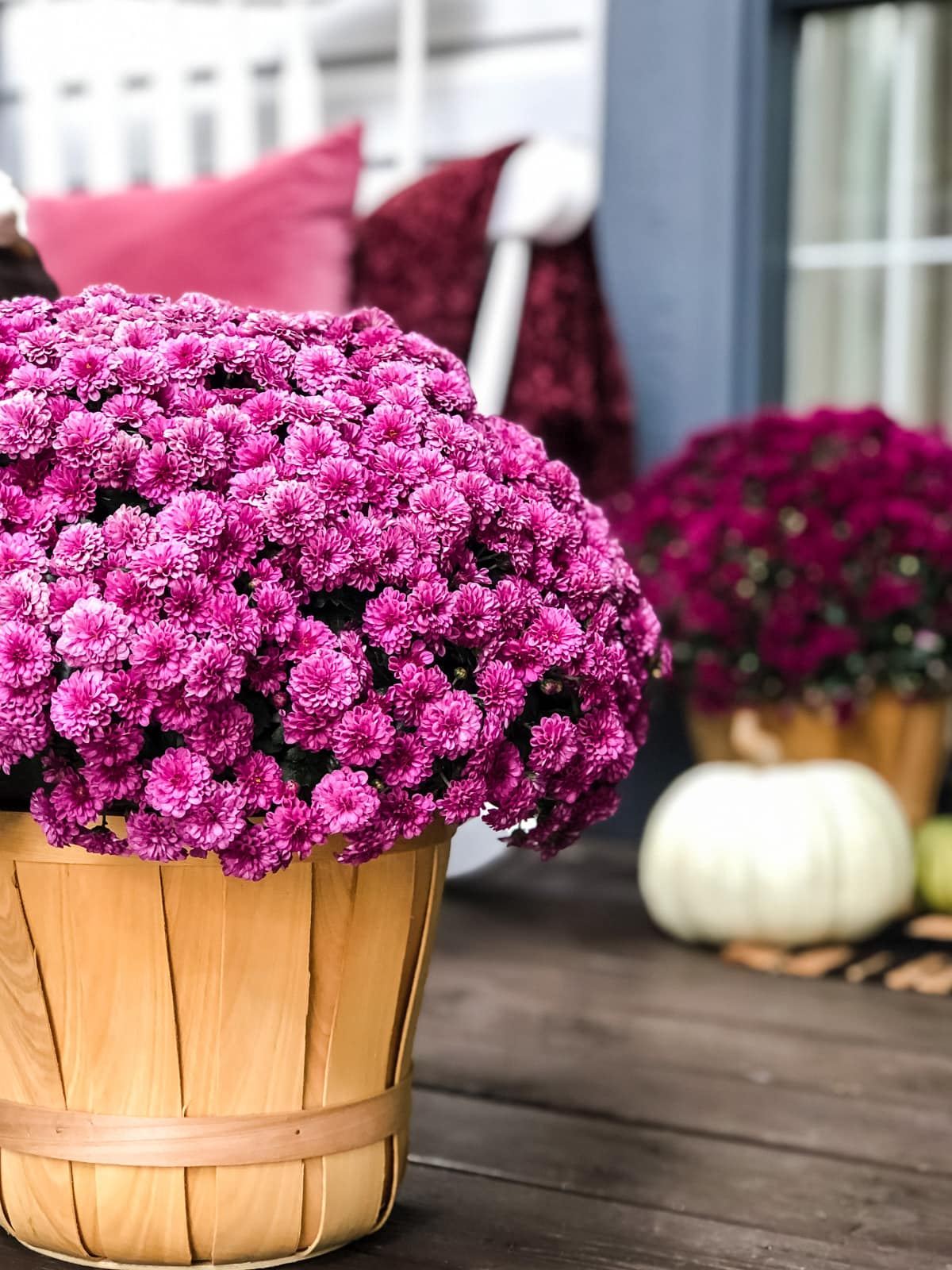 Pretty Mums on a Fall Porch