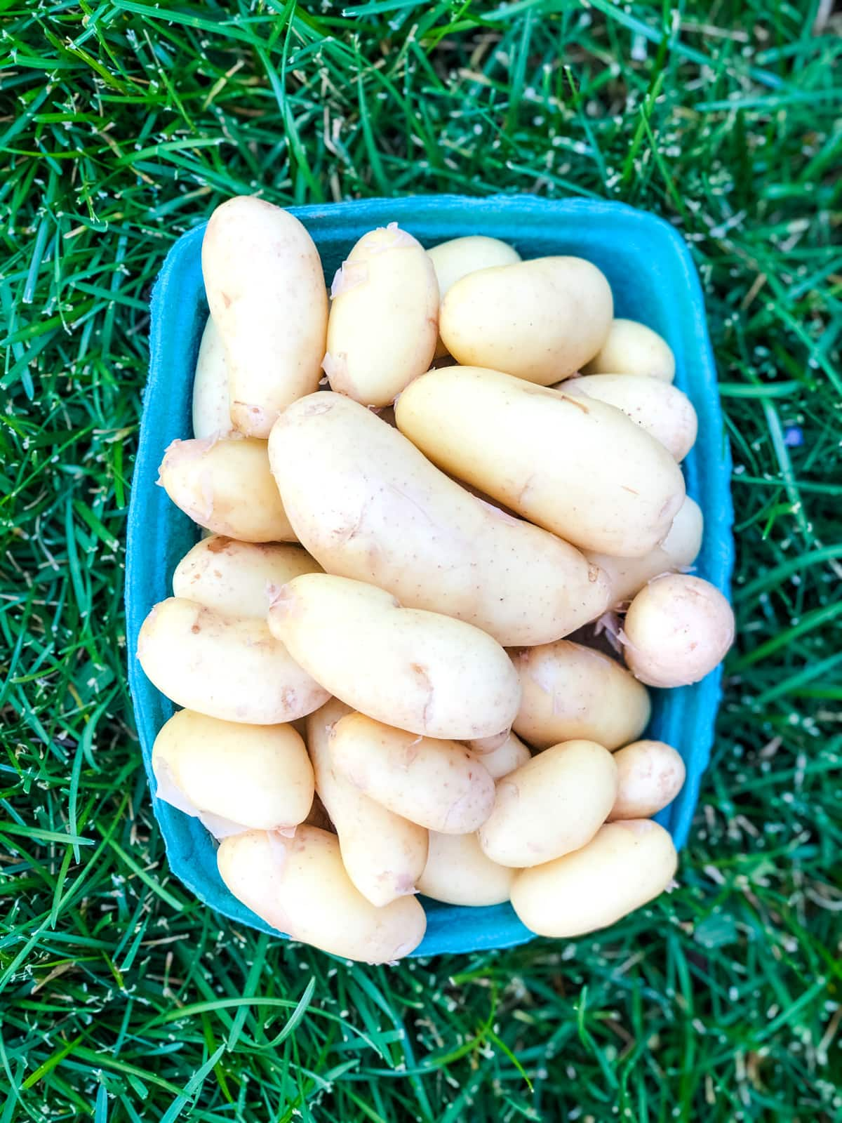 Recipes for Potatoes from the Farmers' Market