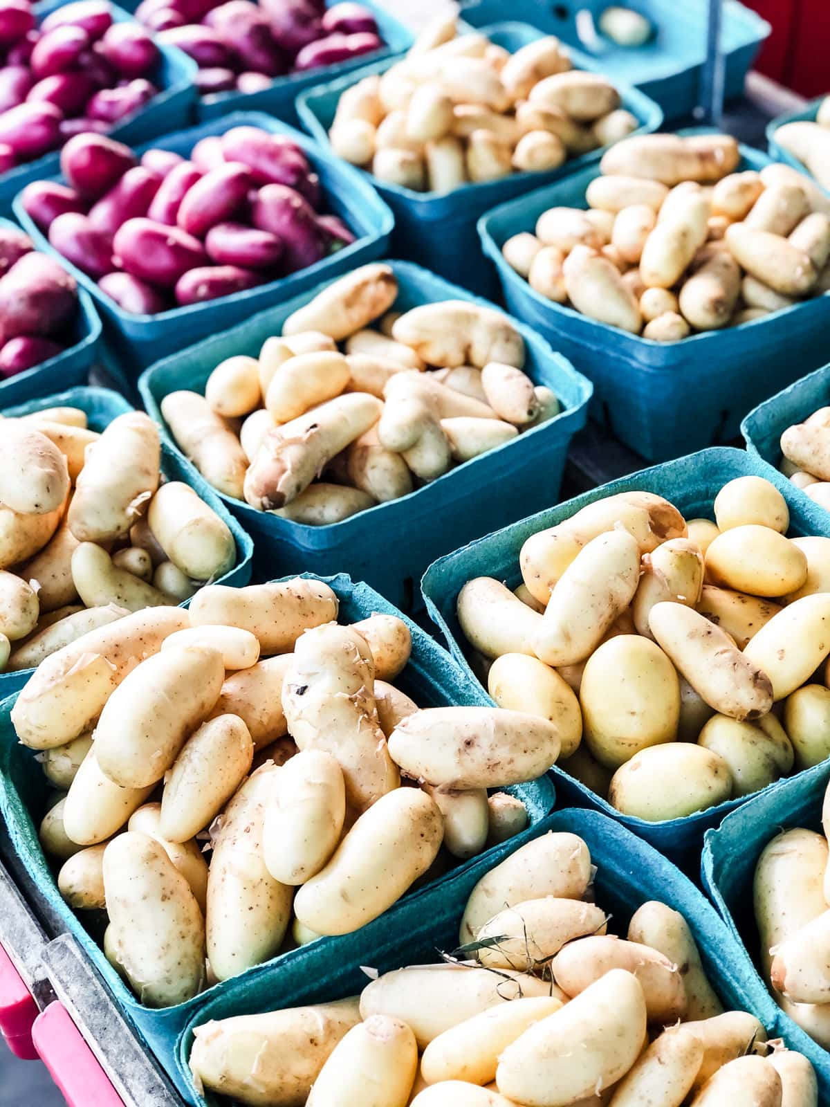 Baskets of freshly dug purple and white potatoes