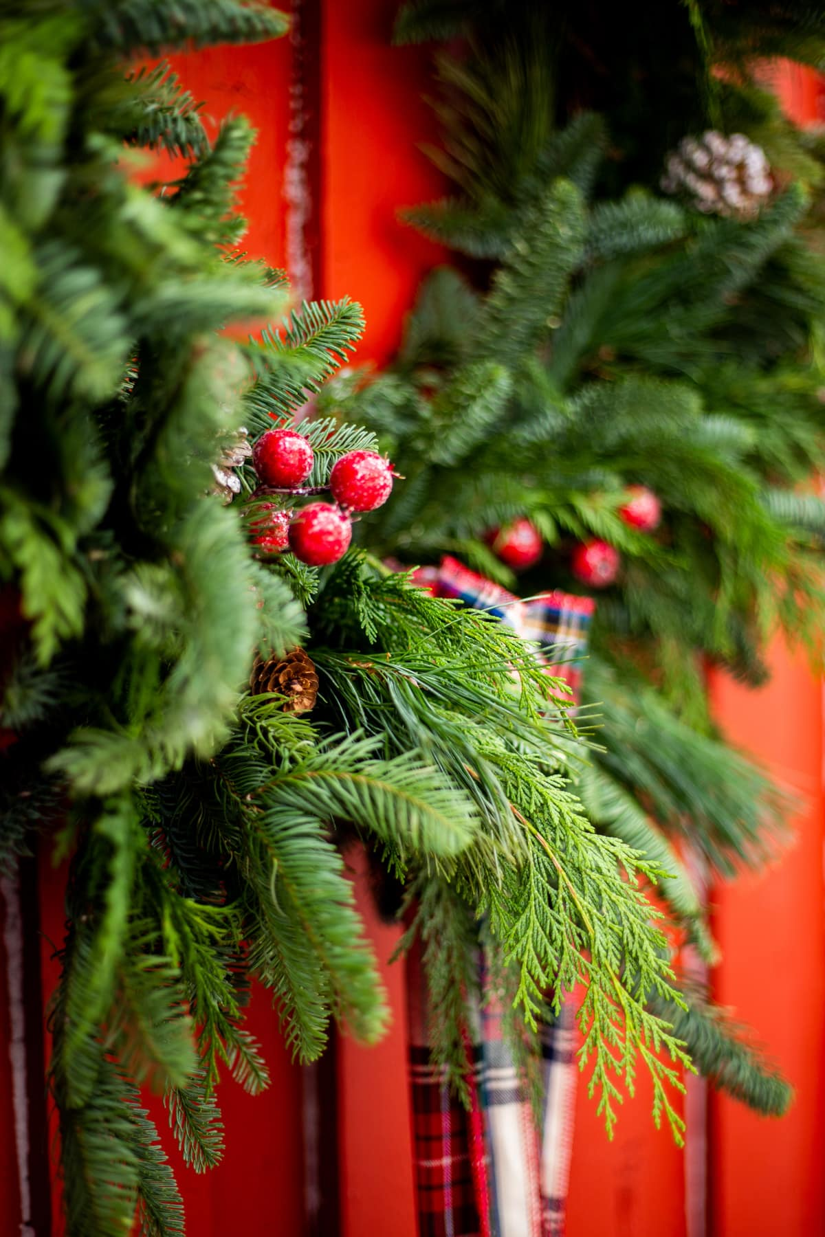 a close up of red holly berries on an evergreen wreath