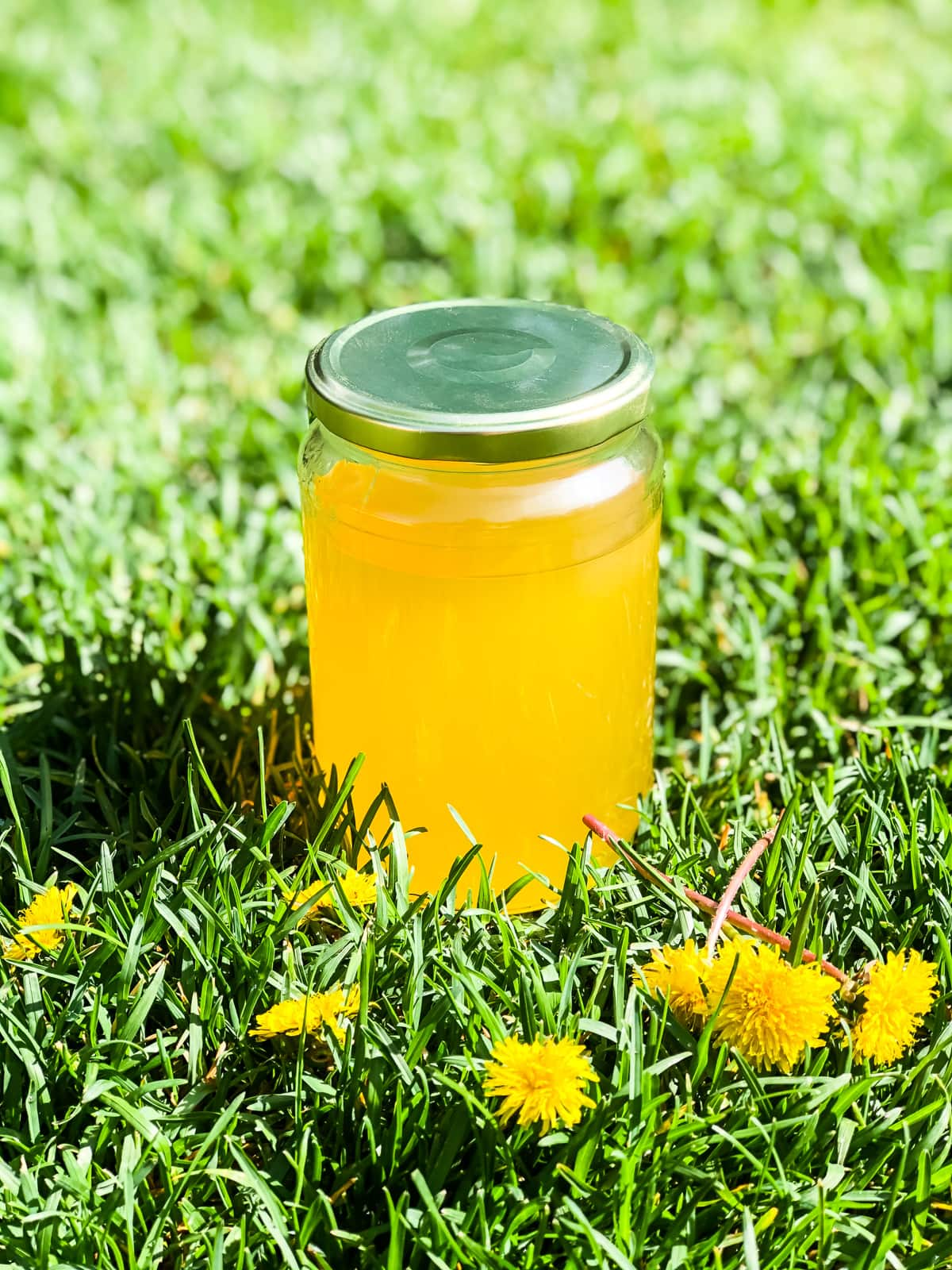 a jar of Dandelion Jelly sitting in green grass. in the foreground are dandelions