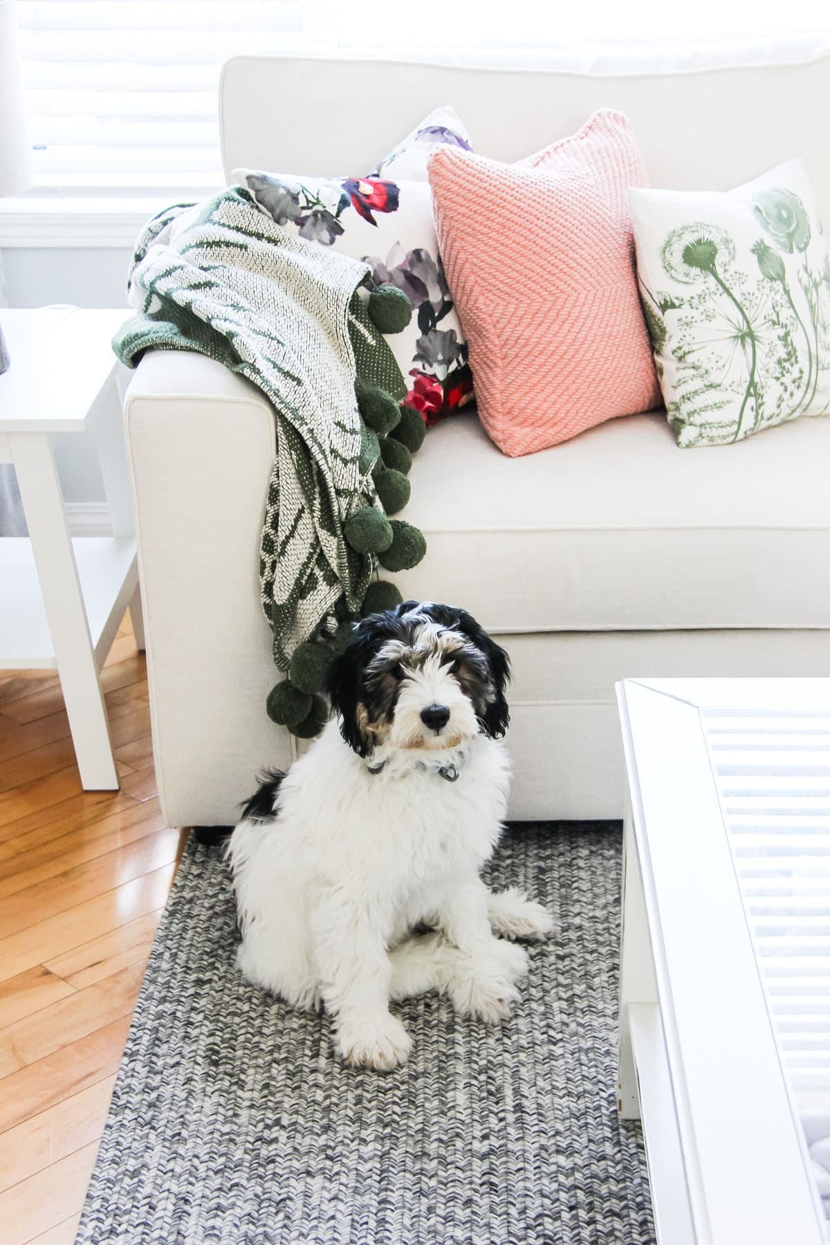 a picture of a white sectional couch in a living room. with throw pillows and blankets. in front of the couch is a black and white puppy