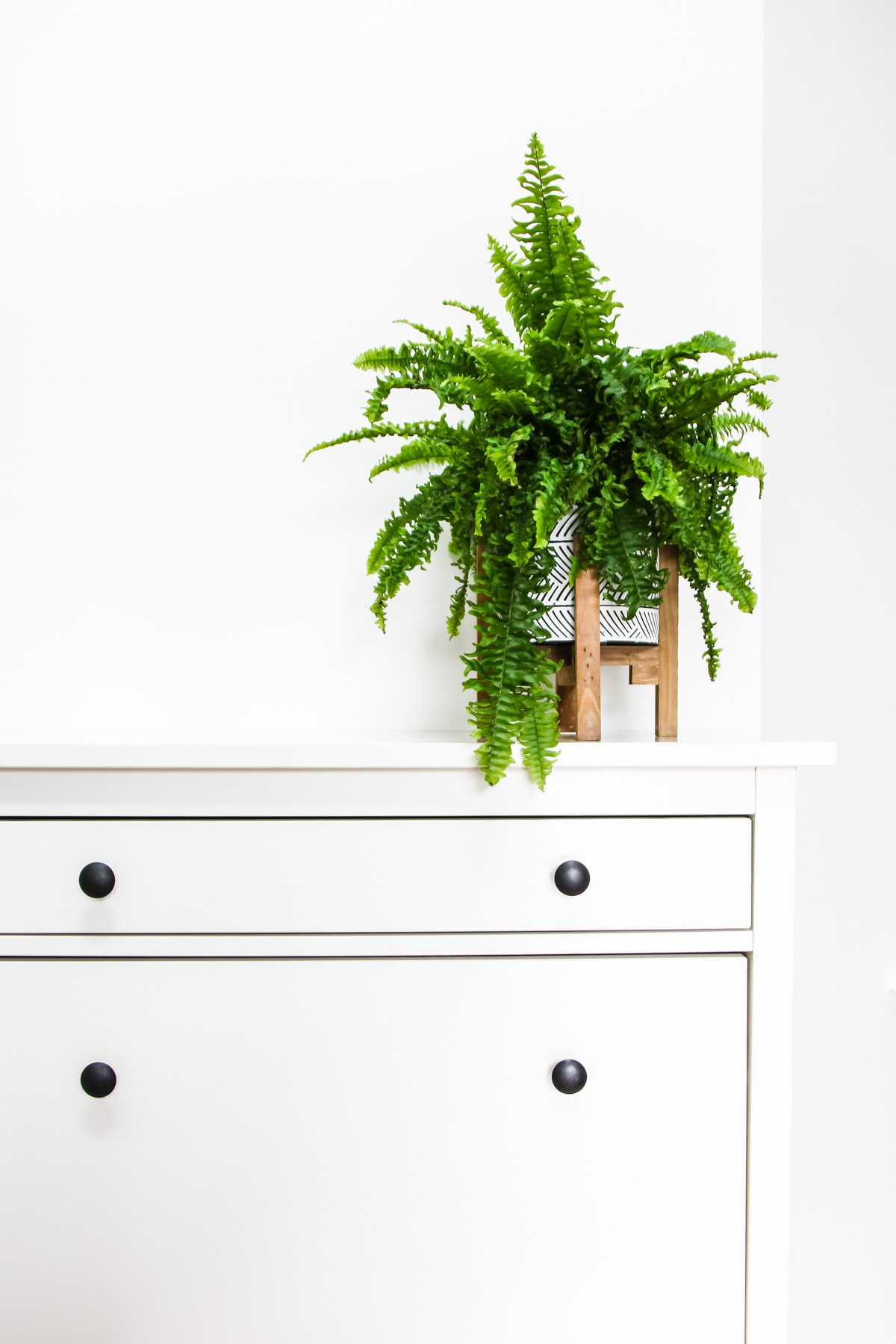a green fern plant on a white cabinet