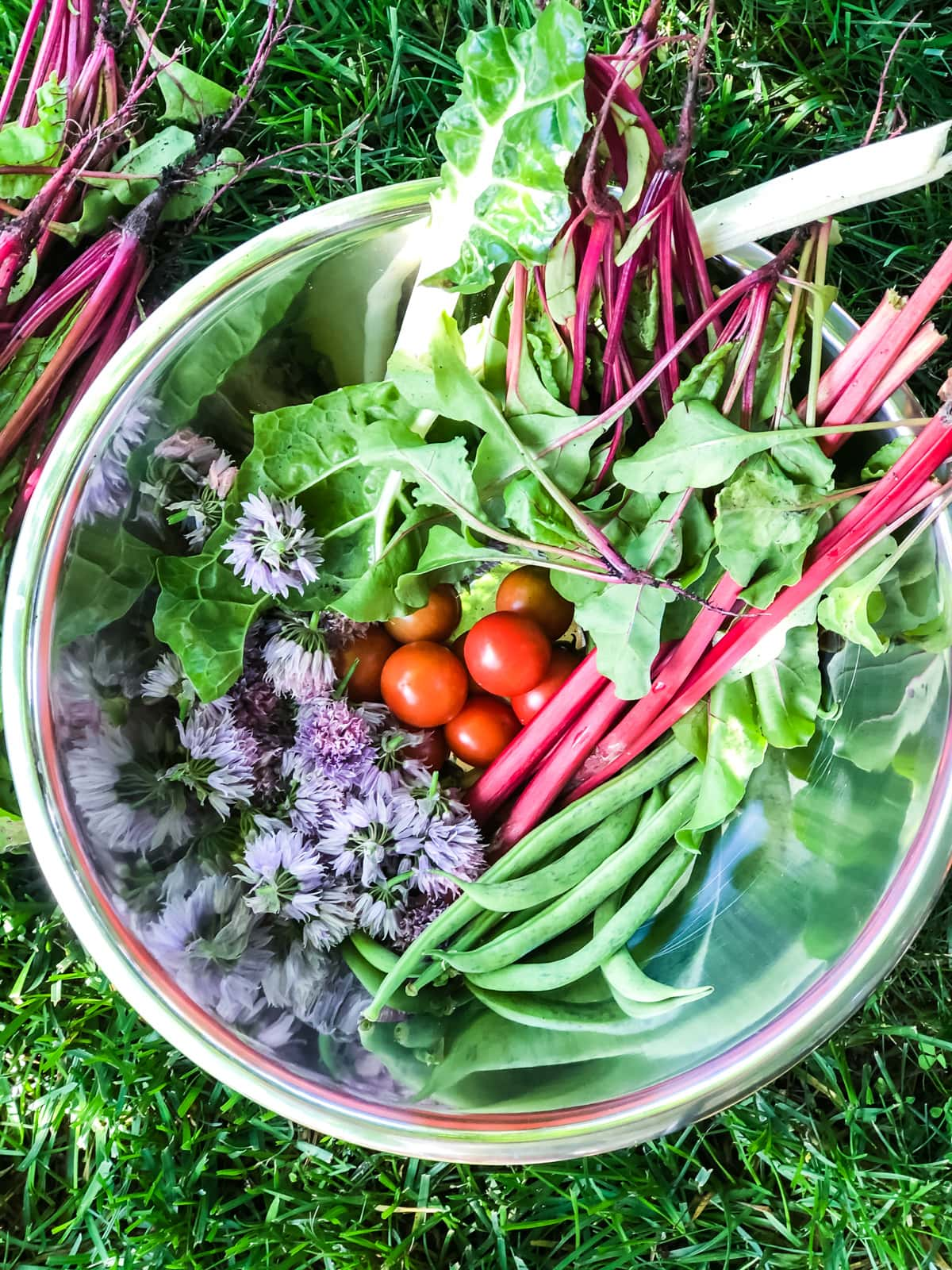 a top down view of a bowl of fresh beet greens, beans, tomatoes, chive blossoms and swiss chard