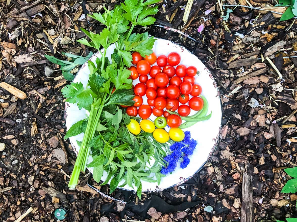 a top down view of a bowl of freshly picked celery, tomatoes, beans and flowers