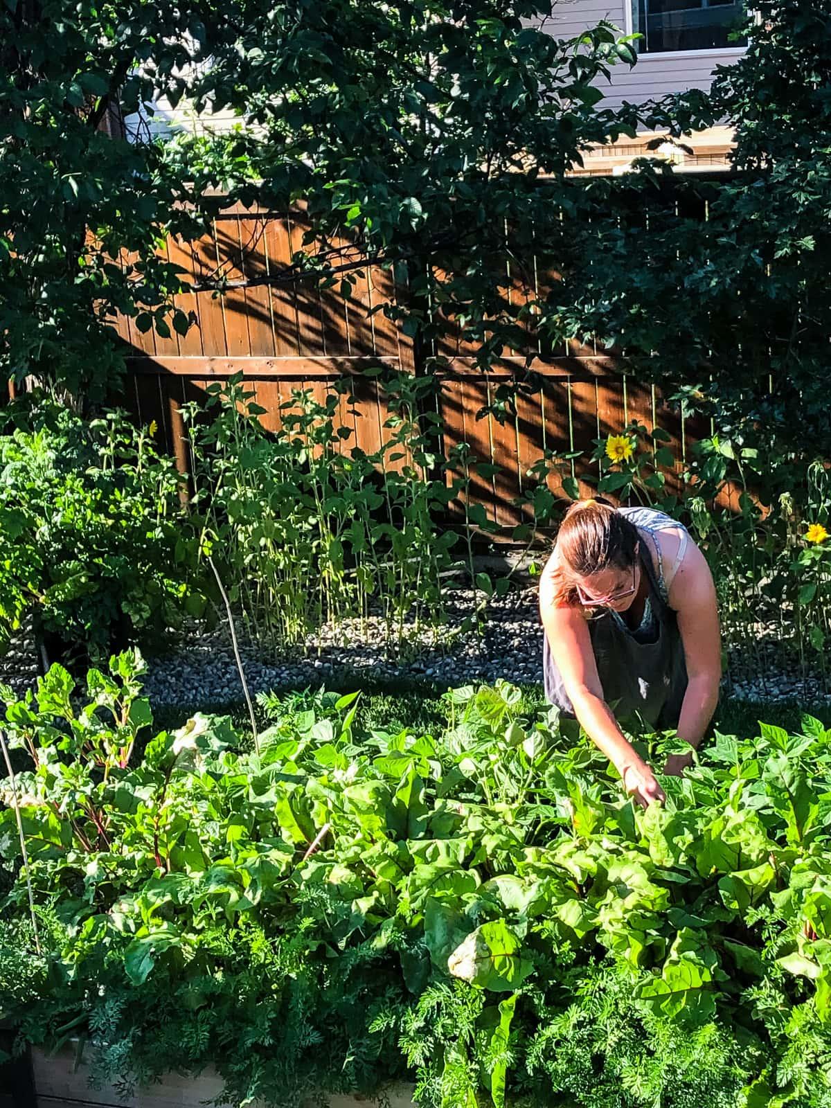a woman picking beans from an urban vegetable garden