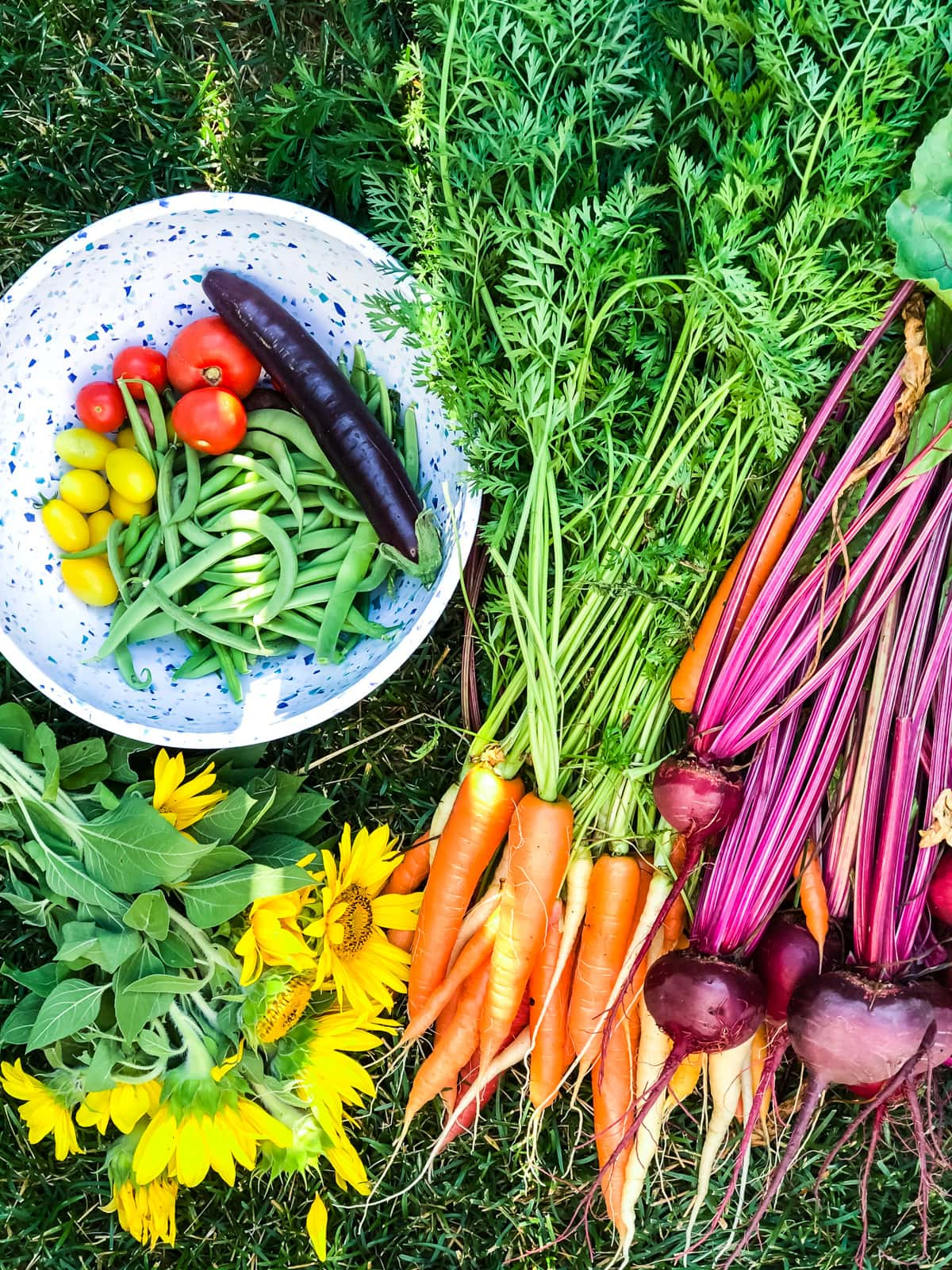 a top down view of freshly picked green beans, carrots, beets, sunflowers and tomatoes
