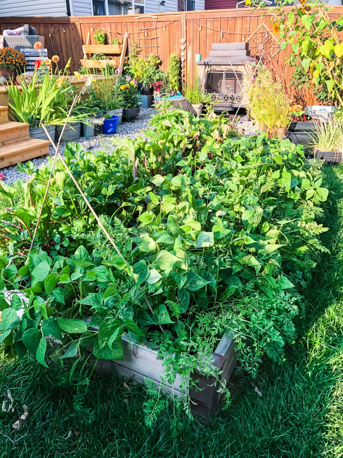 a small urban vegetable garden filled with vegetables. in the background are more pots of vegetables, trees, an outdoor fireplace and chairs