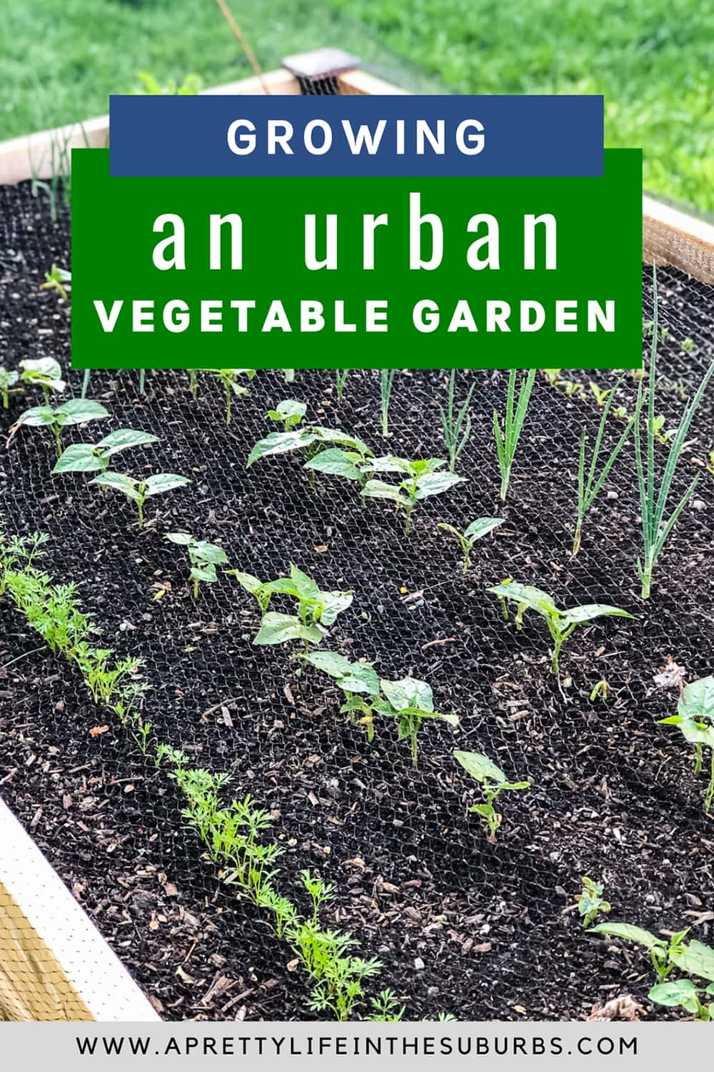 Ideas and inspiration for growing an Urban Vegetable Garden.