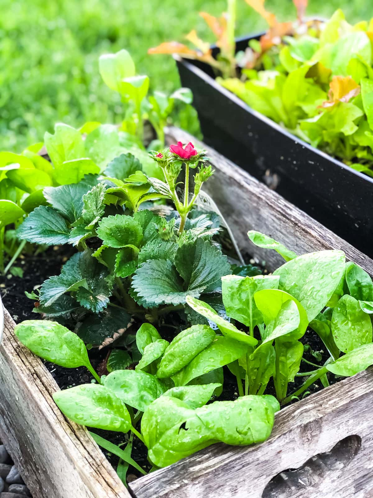 a wooden box filled with strawberries and spinach