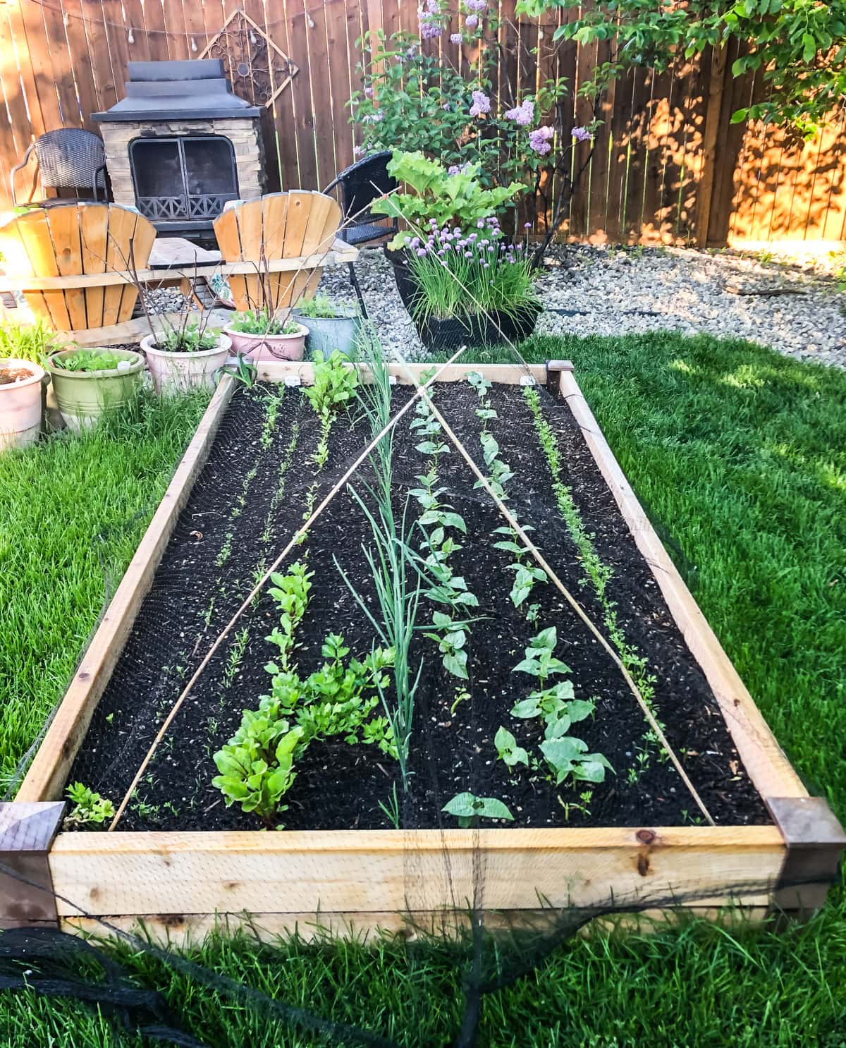 a small urban vegetable garden filled with young seedlings. in the background are more pots of vegetables, trees, an outdoor fireplace and chairs