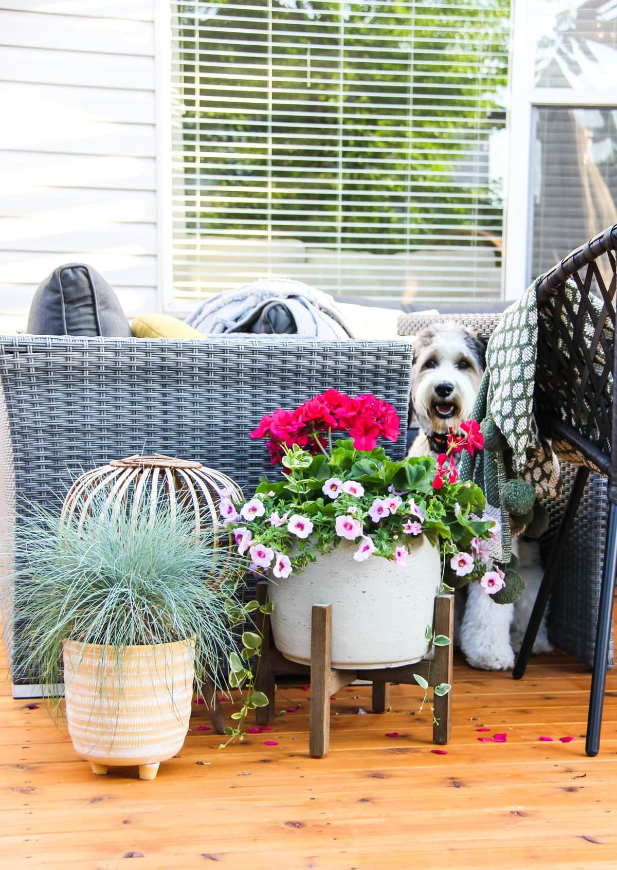 a planter of bluegrass, a planter of pink flowers and a wicker candle holder. in the background is a black and white dog