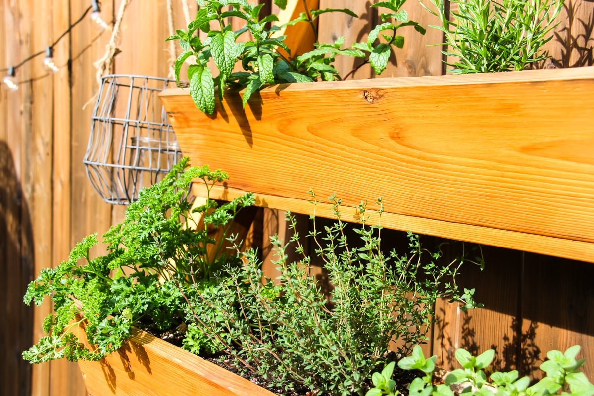 A Vertical Herb Garden full of herbs and lettuce