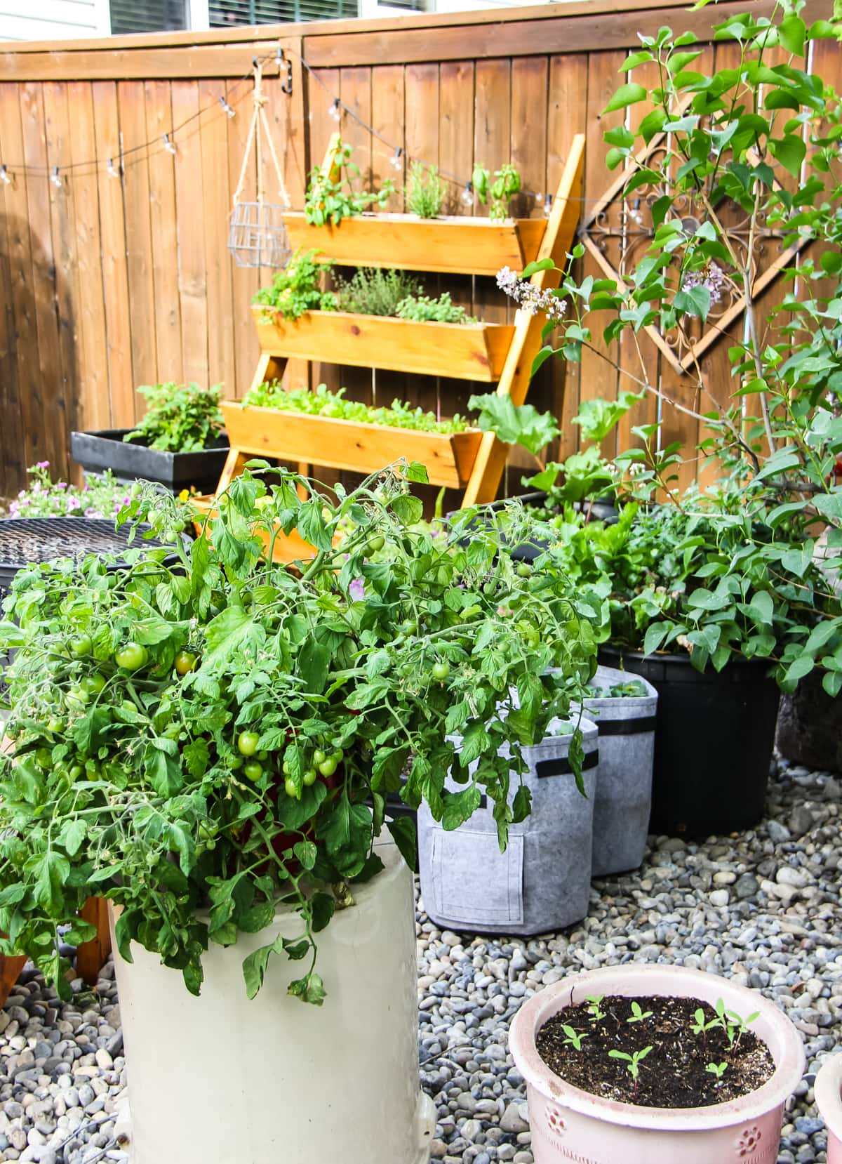 a vegetable container garden of tomatoes, potatoes and a stacked vertical herb garden