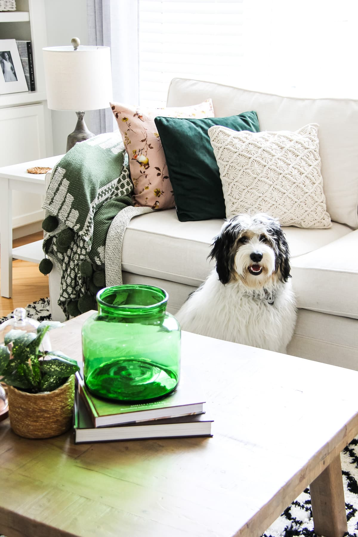 a black and white dog sitting beside a cream coloured couch
