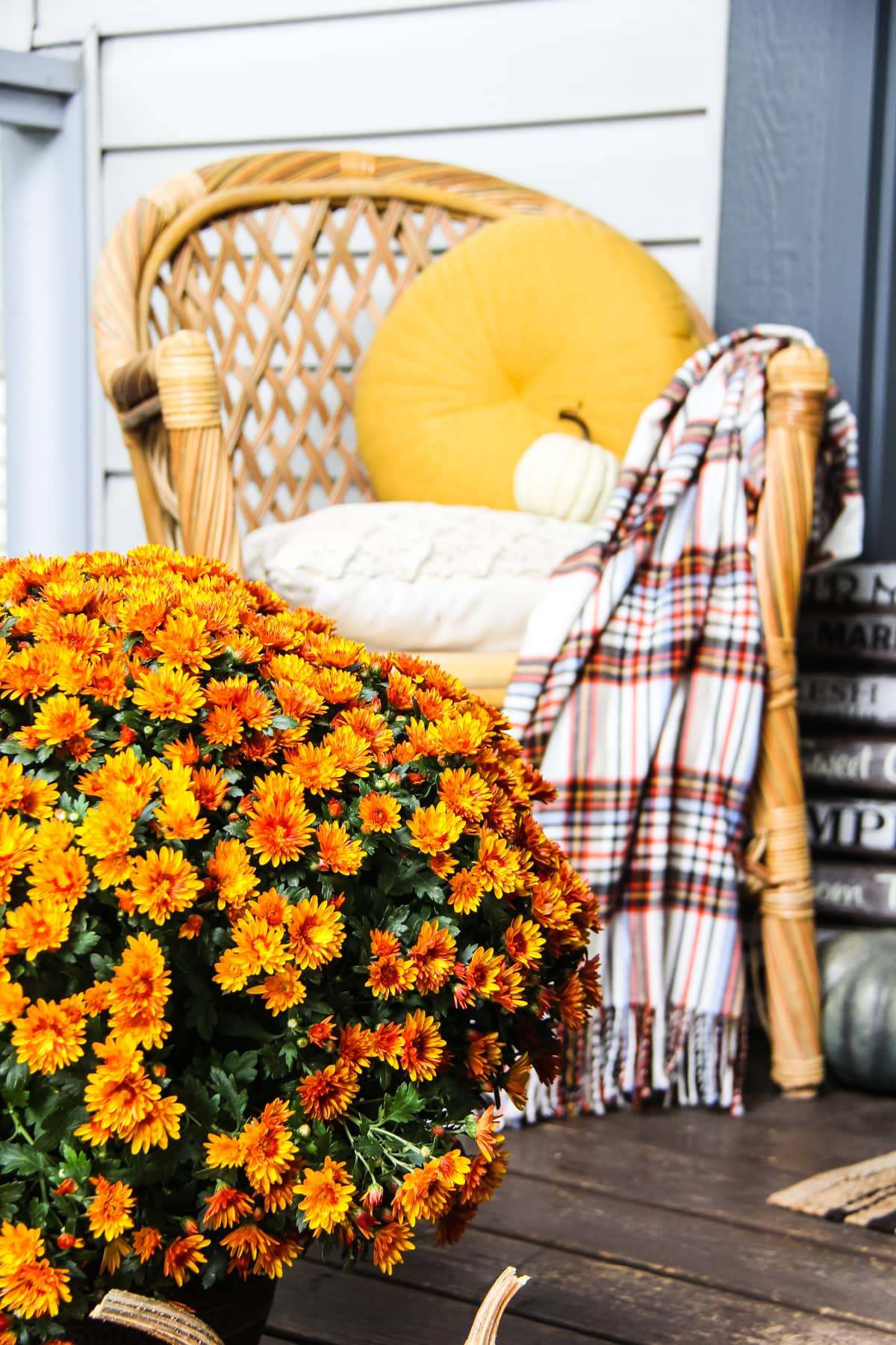 a close up of an orange chrysanthemum. in the background is a wicker chair with a yellow pillow and plaid blanket