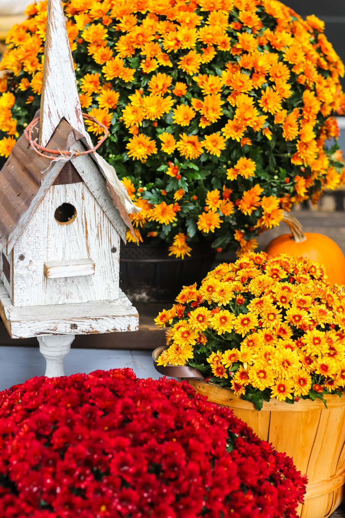 a close up of orange and red chrysanthemums, mini pumpkins and a white birdhouse